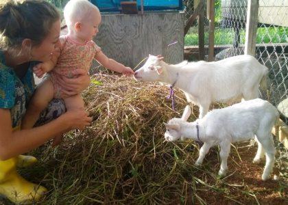 De kinderboerderij compleet